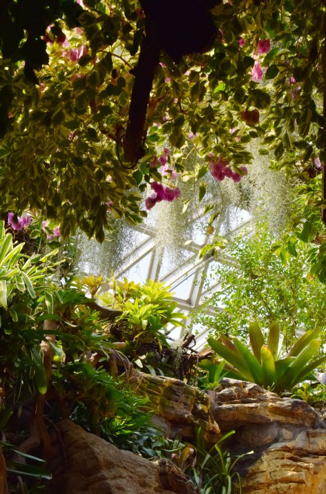 sunlight-breaks-through-the-green-thicket-of-a-conservatory